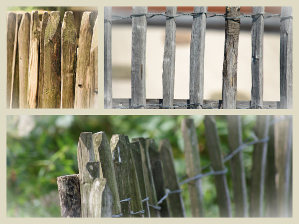 Treillis de jardin sur clôture ganivelle